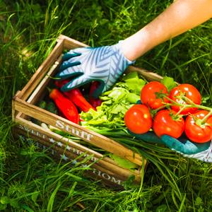 Curso de Producción de Huertas Orgánicas y Plantas Medicinales